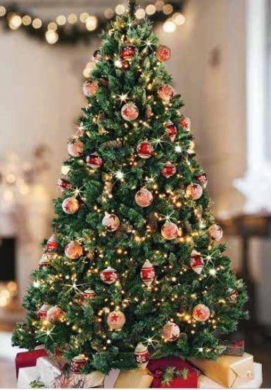 6' Estonian Pine Tree